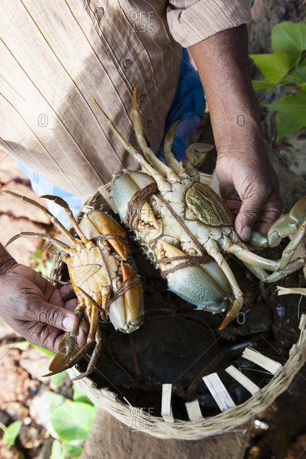 Fisherman holding two crabs - Offset