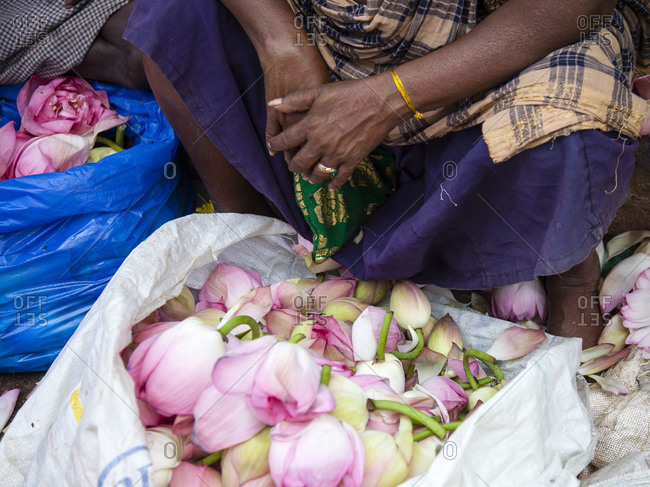 Lotus flowers for sale at Indian flower market