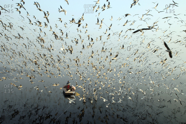 Man feeding birds from a boat on the Yamuna River in New Delhi, India