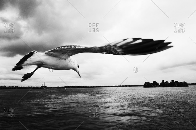 Seagull flying above a sea