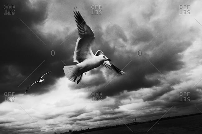 Seagull flying in overcast sky