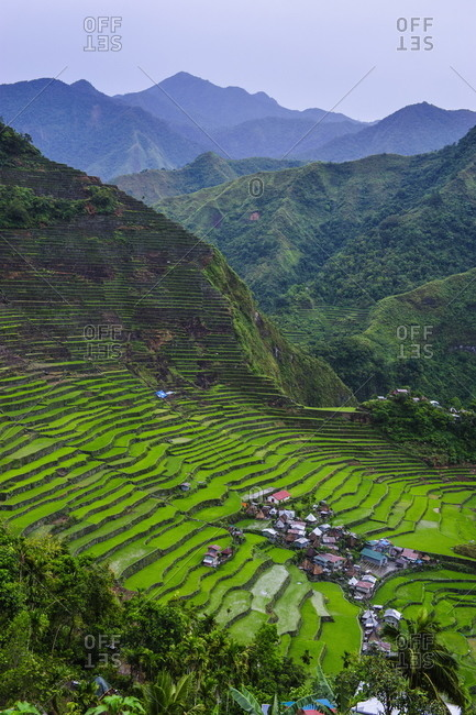 Batad rice terraces - Offset Collection