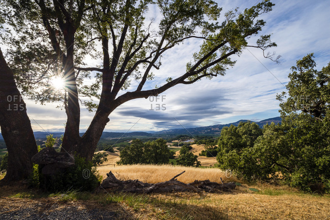 The sun bursts through an oak tree while looking out over Alexander Valley from the top of a hill