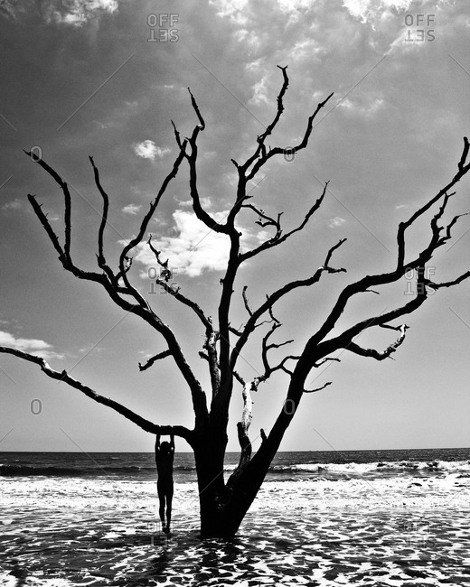 Man hanging from a dry tree on a seashore