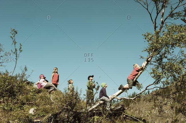 Group of children climbing on tree