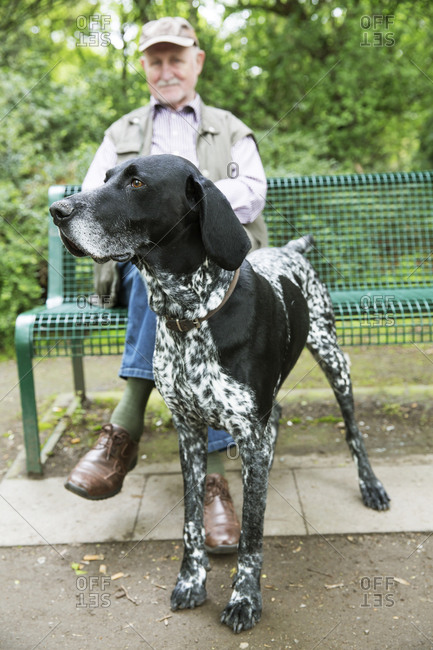 Senior man sitting on park bench with his German Shorthaired Pointer in the foreground