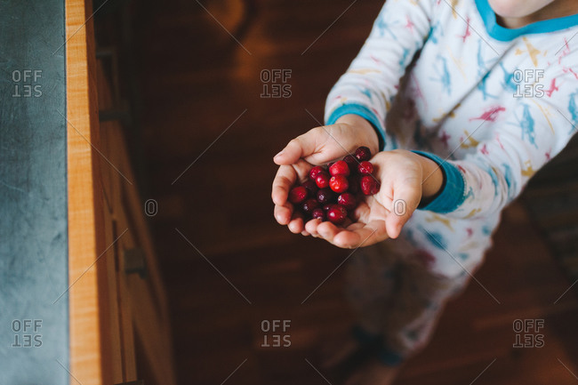 Boy holding a handful of cranberries