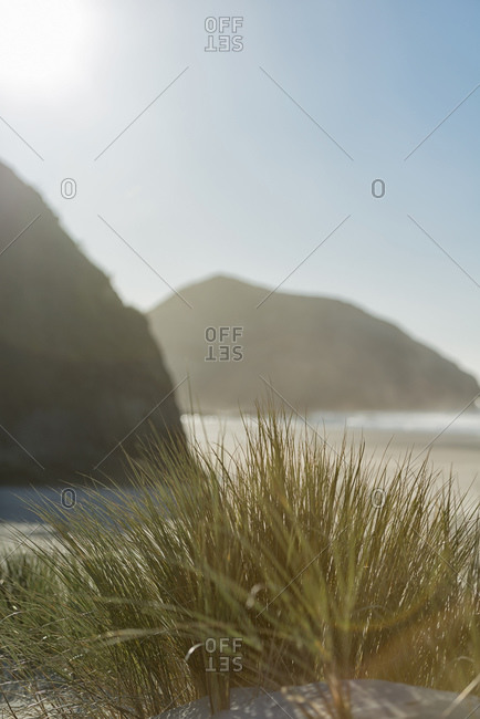Tussock grass in a sand dune at the beach