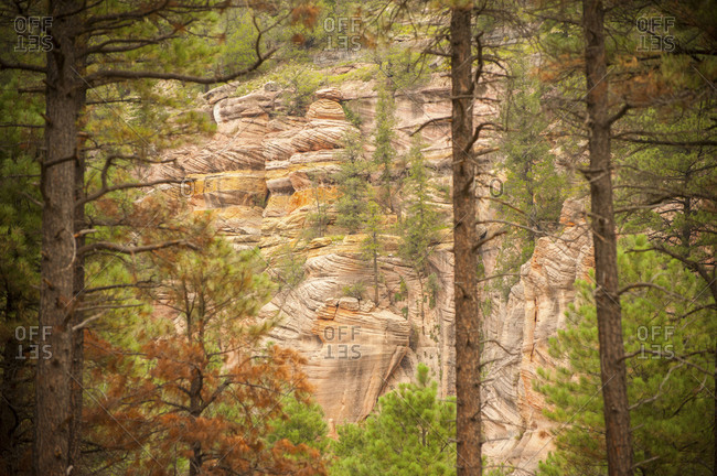 Red sandstone cliff on Sandy Canyon Trail