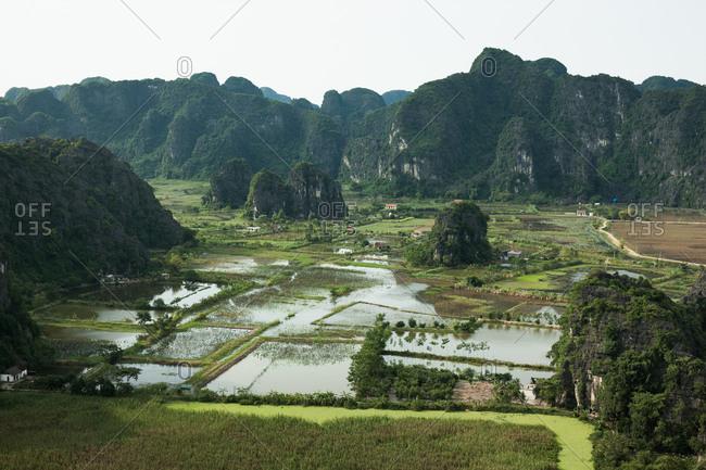 Landscape of a rice field in Vietnam