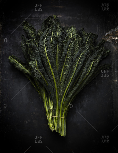 Lacinato kale on black background