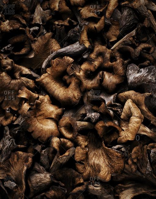 Full frame of chanterelle mushrooms