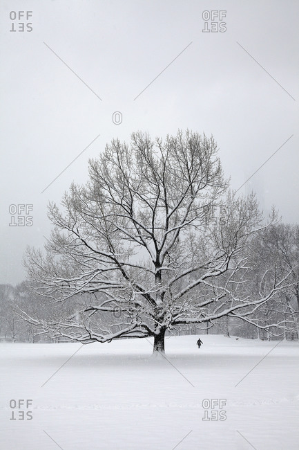 Tree in park at winter