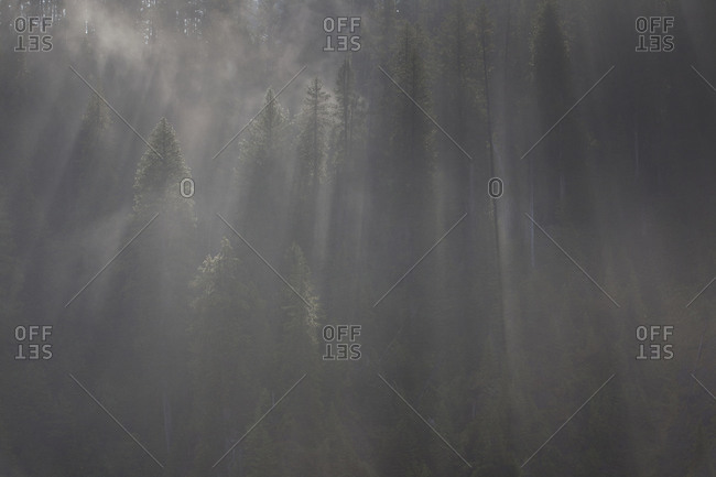 View of a foggy forest