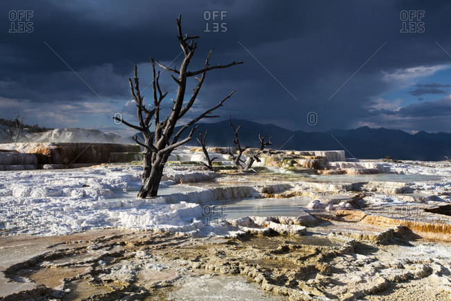 Landscape of a salt flat with a dry tree