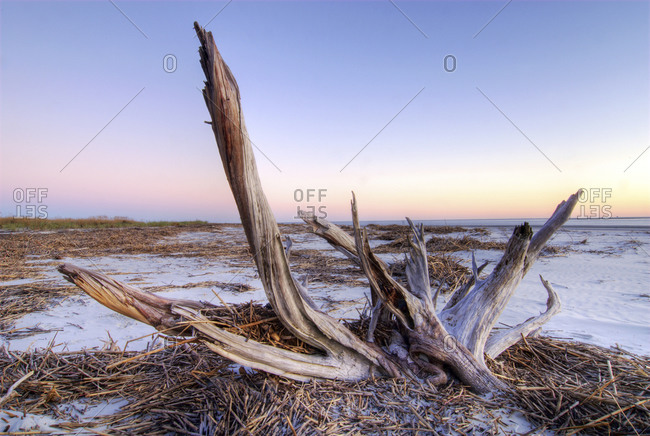 Odd shaped driftwood on a beach on Hilton Head Island, South Carolina