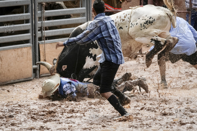 Gallup, New Mexico, USA - August 14, 2009: Bull riding at Intertribal Native Rodeo