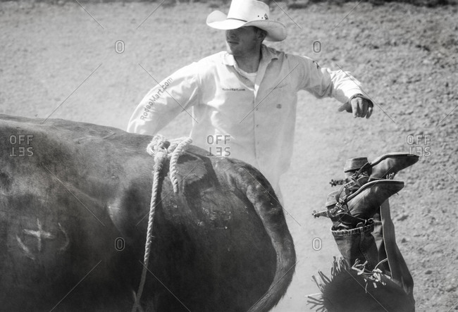 Gallup, New Mexico, USA - September 21, 2007: Man falling off a bull at Intertribal Native Rodeo