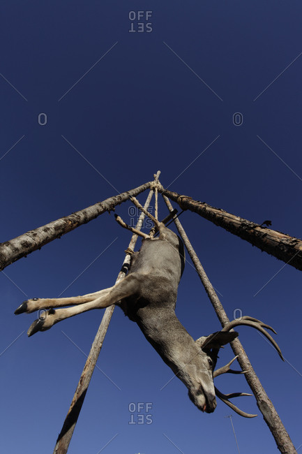 Deer hanging upside down in Santa Fe, New Mexico, USA