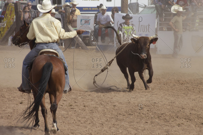 Galisteo, New Mexico - March 9, 2011: Cowboy about to lasso a bull on the loose at a rodeo