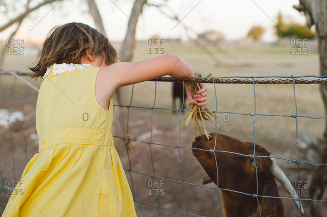 Young girl feeding a goat