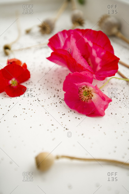 Poppy blossoms, poppy seed capsules, and poppy seed on white wood