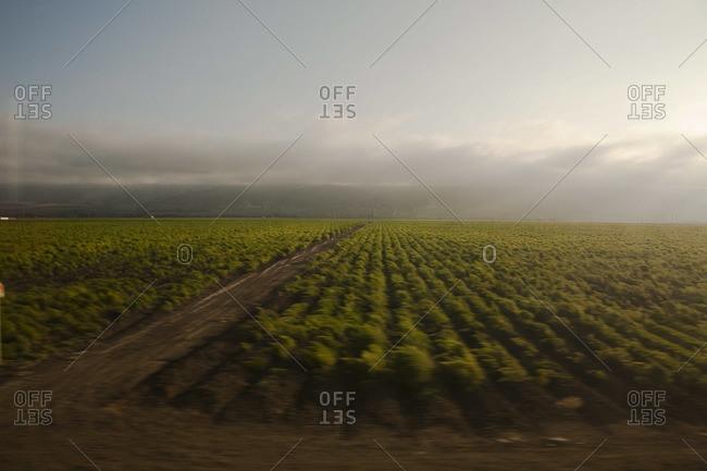 Green fields in California