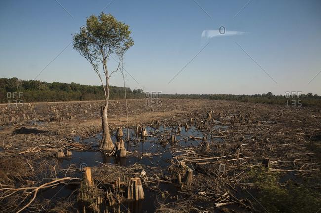 A lone tree in South Carolina