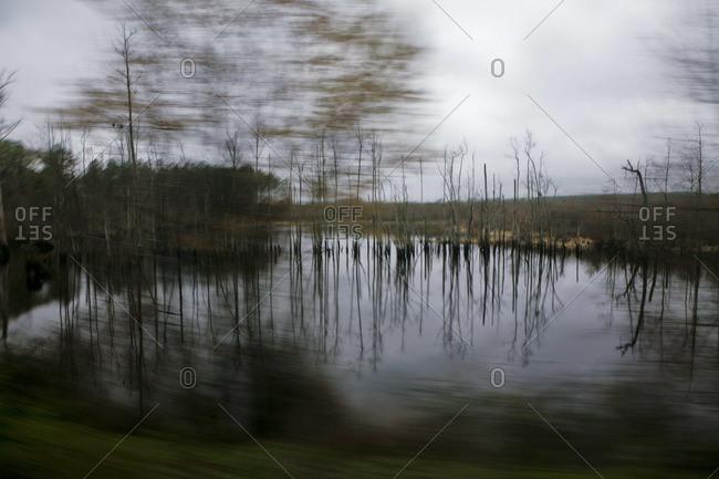 Blurry image of wetlands in Virginia