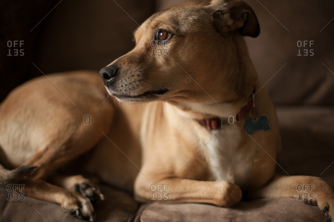 Portrait of a watchful dog