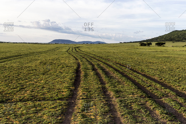 Deep vehicle track ruts cross the savannah plain toward mountains on the horizon.