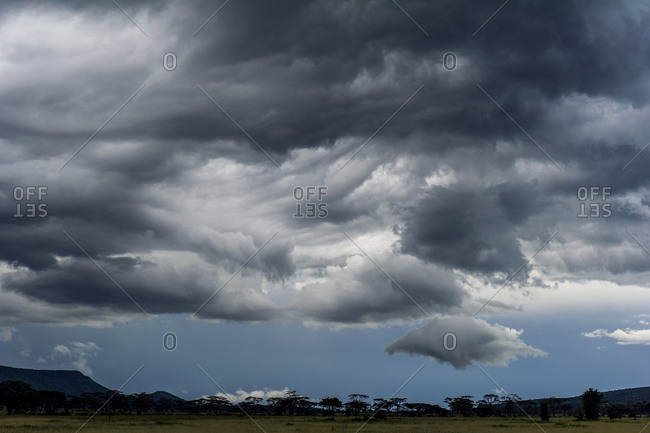 Swirling and tortured storm clouds promise rain to the dry savannah grasslands.
