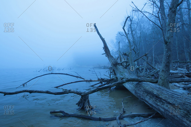 The shoreline of a forested area.