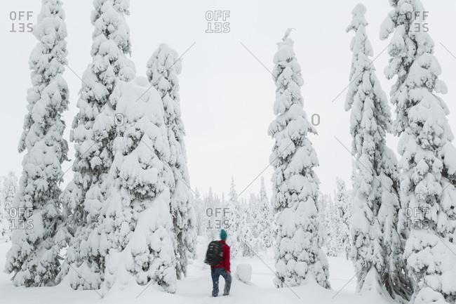 Man exploring the Riisitunturi National Park, Lapland, Finland