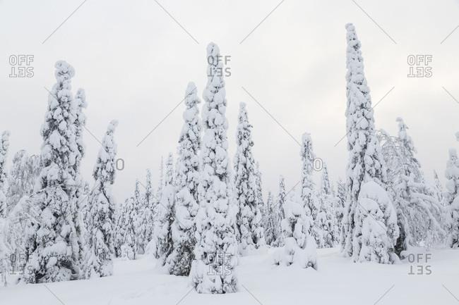 Winter in Riisitunturi National Park, Lapland, Finland