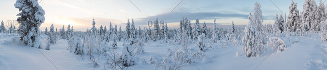 Twilight in Riisitunturi National Park, Lapland, Finland