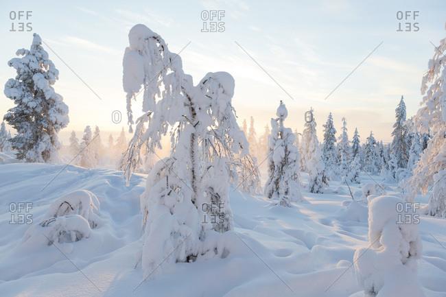 Sunset in Riisitunturi National Park, Lapland, Finland