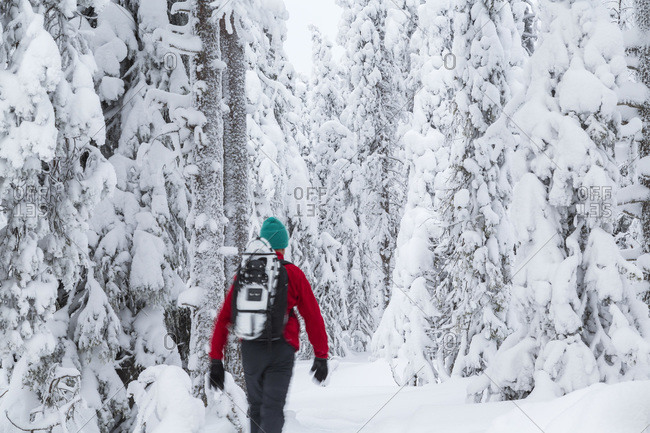 Man entering a snow-covered forest, Riisitunturi, Lapland, Finland