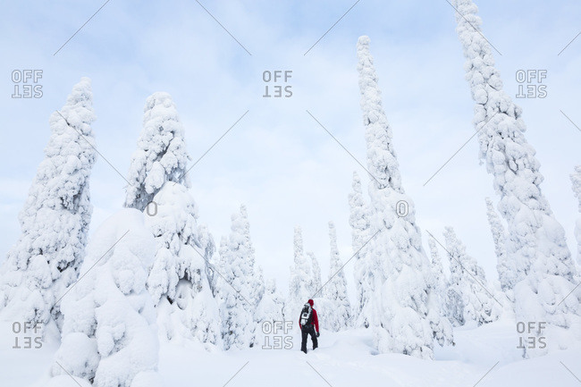 Man exploring a forest, Riisitunturi, Lapland, Finland