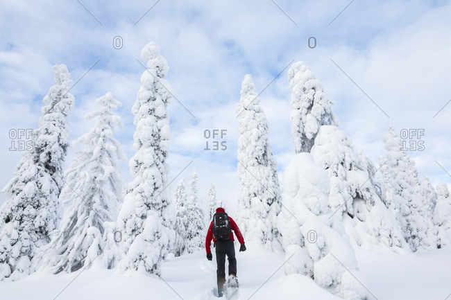 Man hiking in Riisitunturi National Park, Lapland, Finland