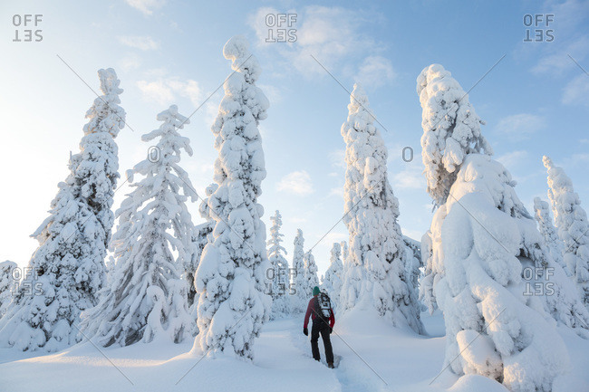 Man hiking in a forest in Riisitunturi National Park, Lapland, Finland