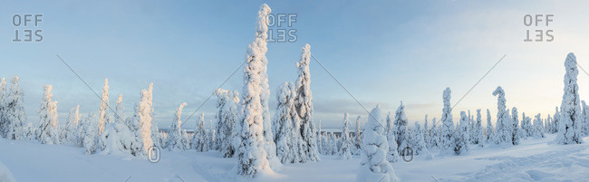 Panorama shot of a forest in Riisitunturi National Park, Lapland, Finland