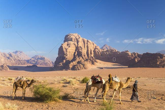 Man with camels in desert, Wadi Rum, Jordan