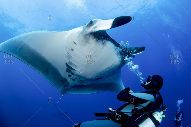 Giant oceanic manta ray appears to enjoy attention of scuba diver.
