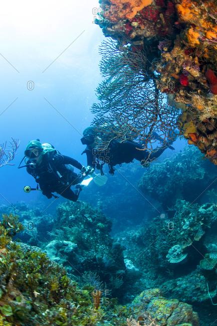 Divers explore a deep water reef near Bimini