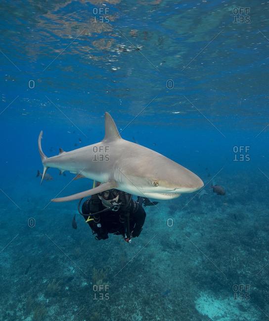 Scuba diver watches Caribbean reef shark.