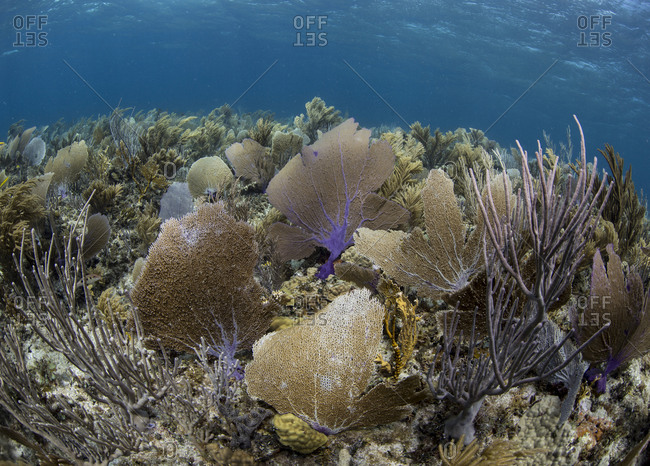 Abundant marine life covers a coral reef in Green Turtle Cay.
