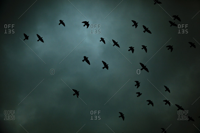 Low angle view of birds flying high in the sky