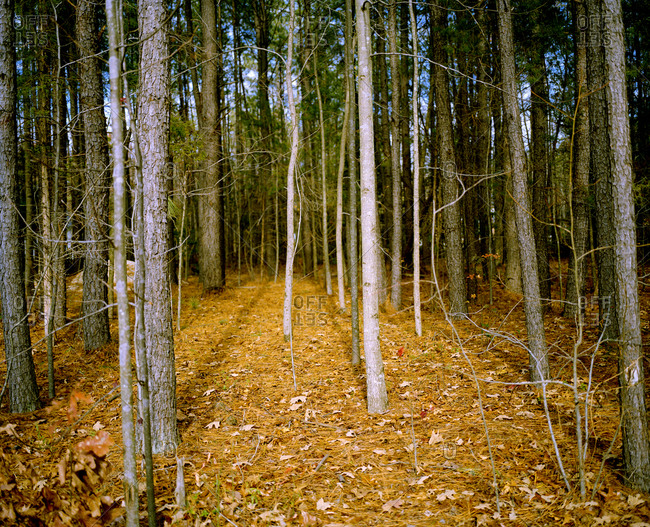 View of a forest in Virginia, USA