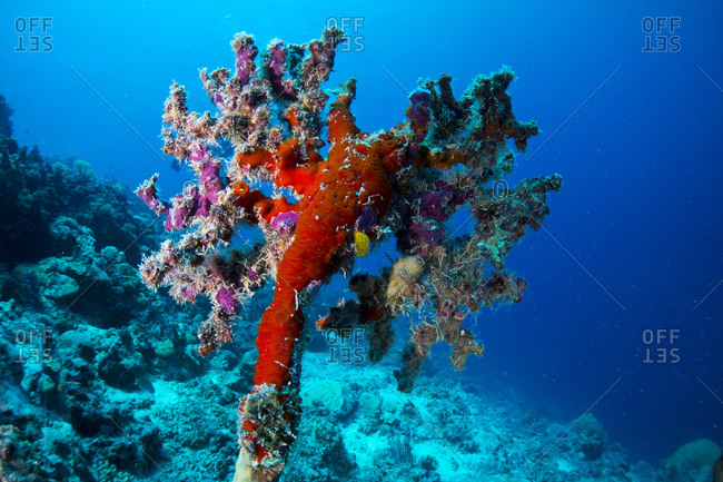 Dead coral with new life on top